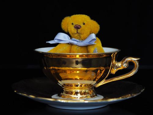 Teddy in Teacup
