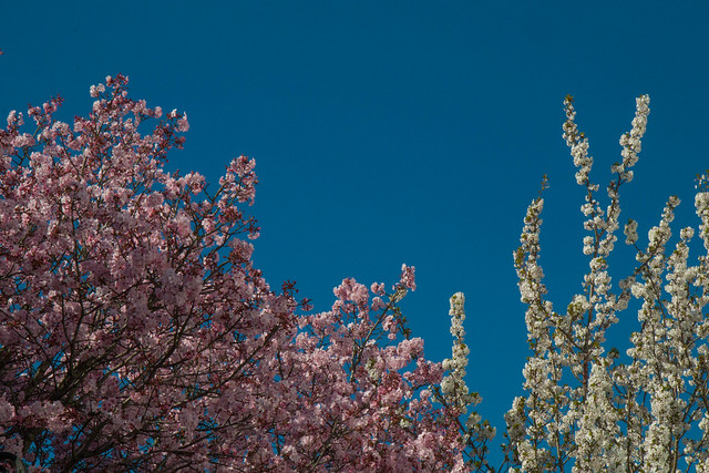 Pink, White and Blue
