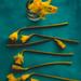 daffodils by auntneecey