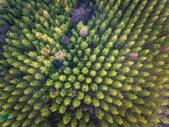 Darley Dale Trees Aerial