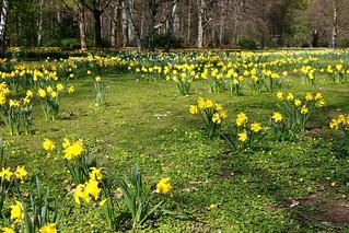 (2017-04-09) Frühling im Berliner Tiergarten