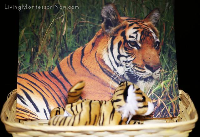 Bengal Tiger Basket