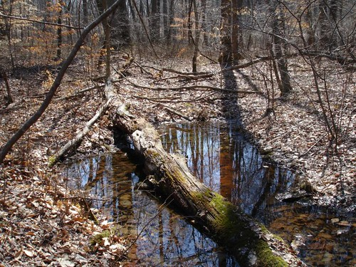 Image of a seasonal pool