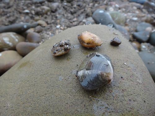 感謝這片孕育我們長大的海洋母親!圖片提供:沙浪。