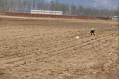 村民正在鄰近污染地點的農田裡種下新一季的農作物