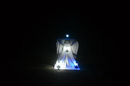 ライトトラップ初め20140401