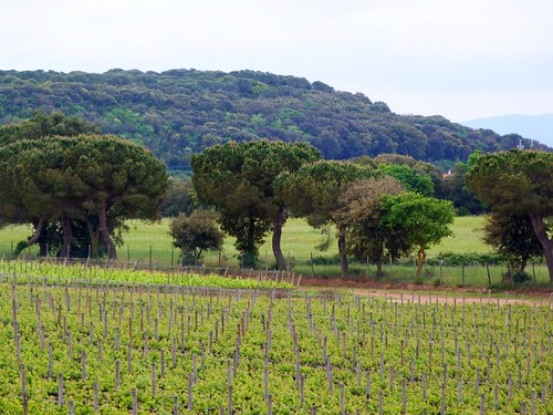 Finca Argentiera (Toscana, Italia)