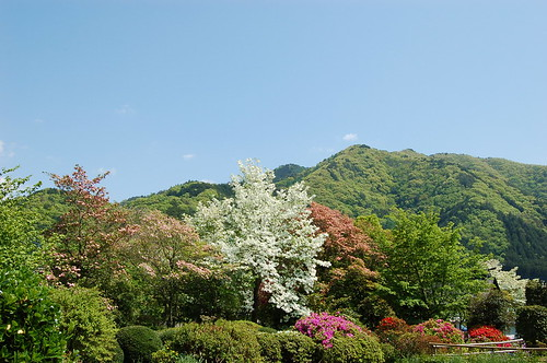 慈雲寺の庭2