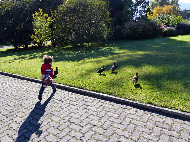Eskil running after ducks