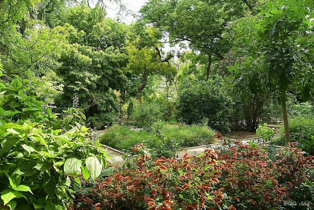 Jardin Botánico de Valencia (18)