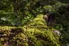 Moss Leaf