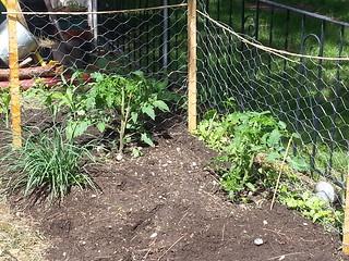 Tomato fences