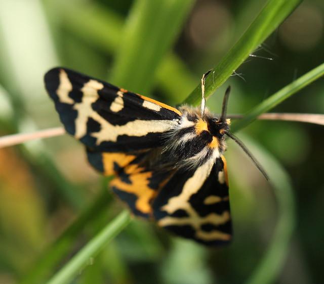 butterfly&war12