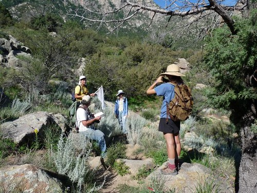 Organ Mountain Butterfly Count