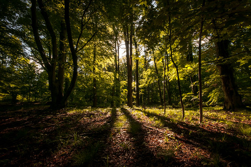 trees ny newyork forest woods shadows westchestercounty sigma1020mm southsalem lewisboro leonlevypreserve