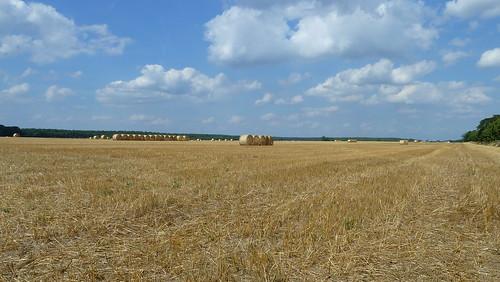 20130805 Feld Strohballen Magdeburg nach Tangermünde Elbe Radweg (79)