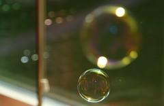 dew(0.0), flower(0.0), drop(0.0), leaf(0.0), sunlight(0.0), glass(0.0), moisture(0.0), reflection(0.0), liquid bubble(1.0), yellow(1.0), light(1.0), macro photography(1.0), green(1.0), close-up(1.0), circle(1.0),