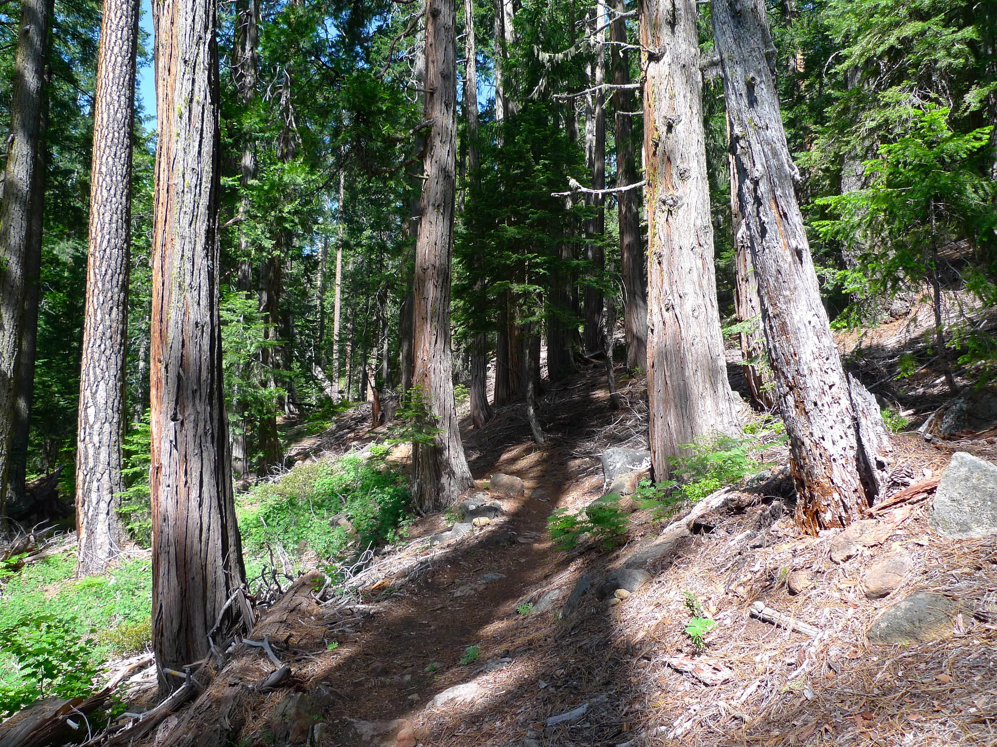 The first few miles are heavily forested