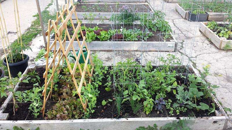 6-5-14 garden