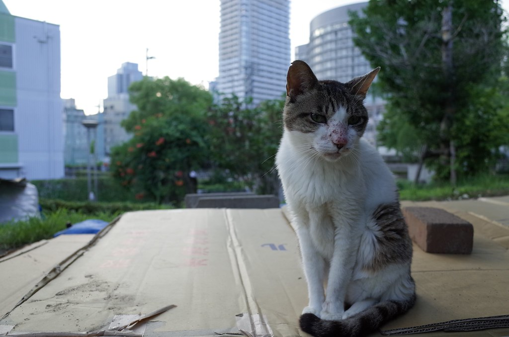 stray cat at Ogimachi Park