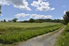 Chemin dans les champs