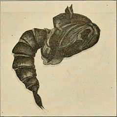 """Image from page 280 of """"Preventive medicine and hygiene"""" (1917)"""