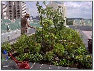 可以吃的屋頂花園,圖片來源:Edible Gardens