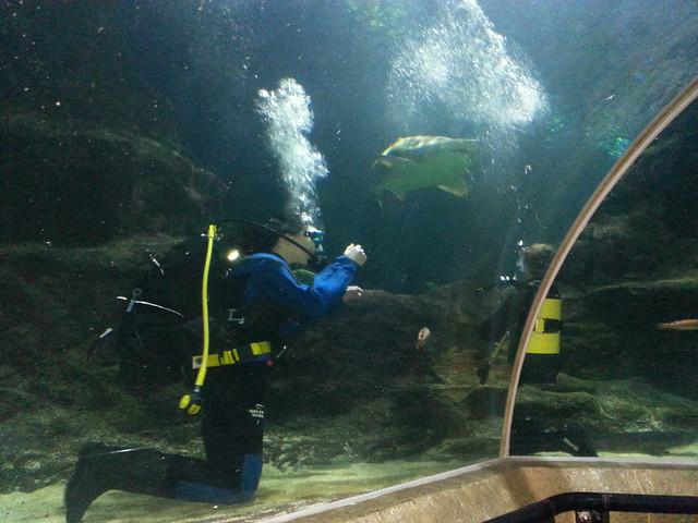 Diving 06