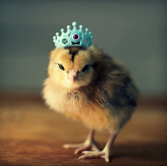 Top-10-Baby-Chicks-in-Hats-7