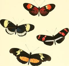 """Image from page 301 of """"The genera of diurnal lepidoptera : comprising their generic characters, a notice of their habits and transformations, and a catalogue of the species of each genus"""" (1846)"""