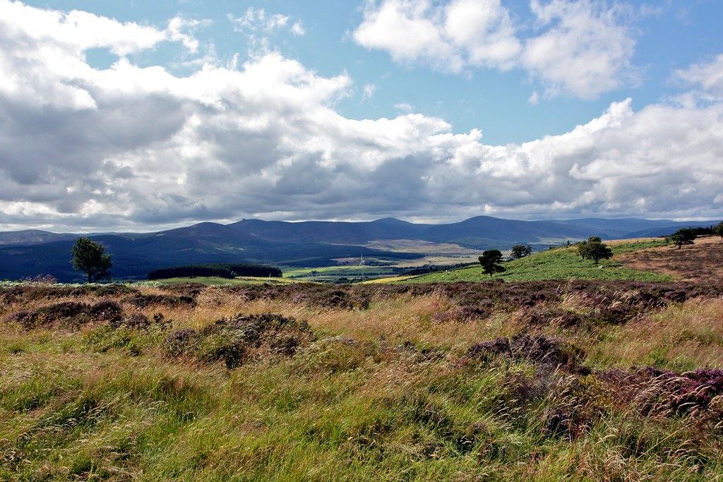Eastern Mounth from Scolty Hill