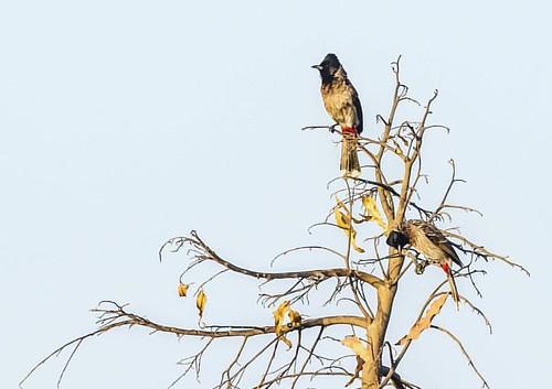 instagramapp square squareformat iphoneography uploaded:by=instagram clarendon birdsofindia nature urbansongbirds