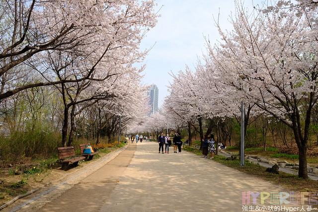 首爾林seoul forest (43)