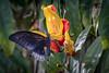 Wisley Butterfly-11