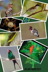 Celebrando el Dia de la Tierra con la biodiversidad del Caribe.