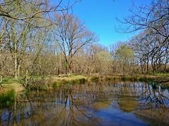 Ballade en forêt - Photo of Vacquiers