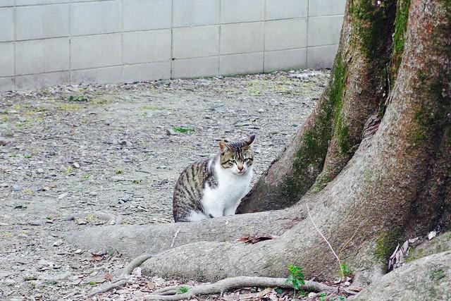 Today's Cat@2017-04-06
