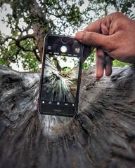 Ⓜ️obile + Mobile + Trees  =