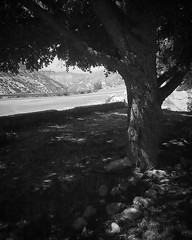 Desert breezes kiss the whispers of trees...#spiritualcleanse #soulfulphoto #healingart #aphotoaday #losangeles #angelesnationalforest #palmdale #lacanada #angelesforesthwy #blackandwhite