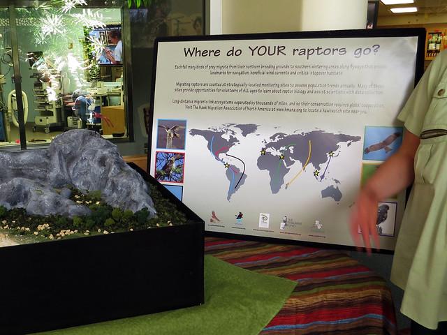 Raptor Migration
