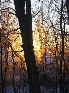 the sunrises through the trees