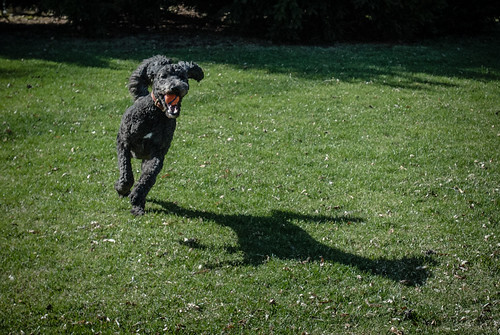 Happy Dog & Shadow