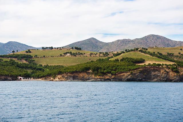 Vinyes verdes vora el mar