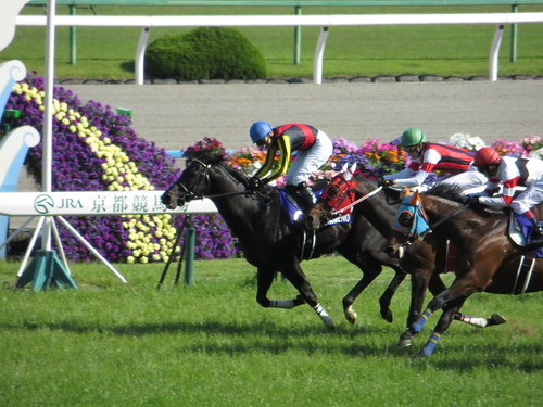 第149回天皇賞 / 149th Tenno Sho Spling (GI) - Kyoto Racecourse (May 4, 2014)