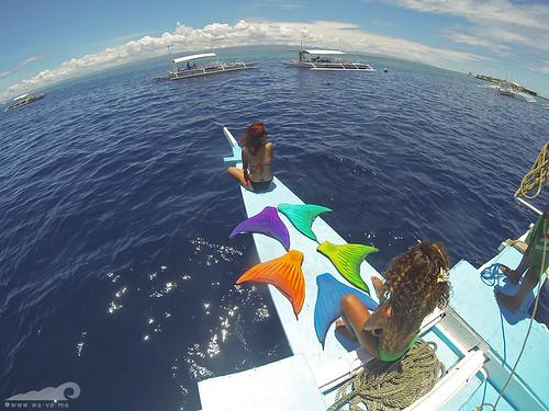 waveme mermaid hopping tour