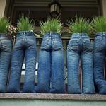 Planter-Pants