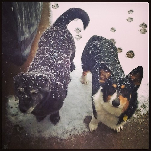 Let us in you crazy lady! We don't go out in May snow! #snowinmay