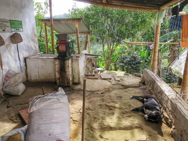 The coffee culture of Colombia