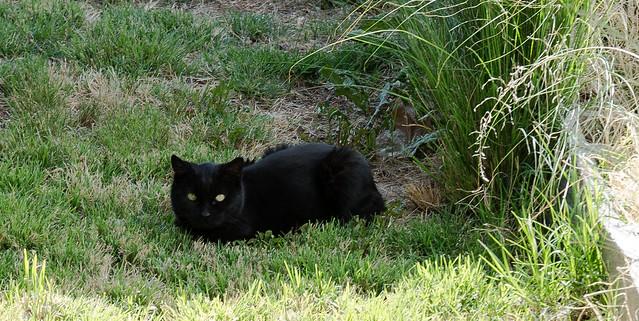 Green Eyed Hunter