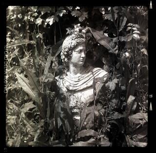 overgrown bust